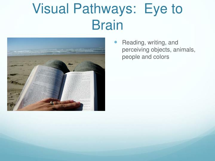 Visual Pathways:  Eye to Brain