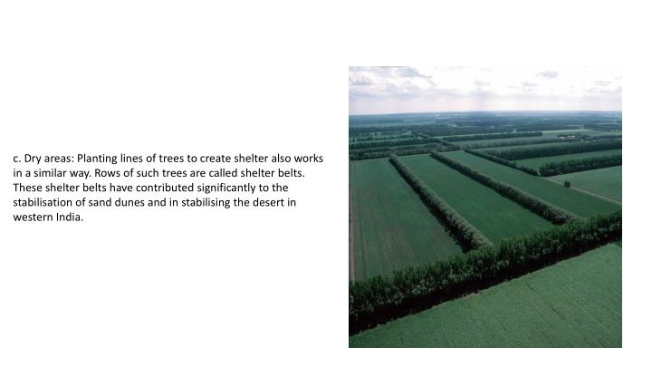 c.Dry areas: Planting lines of trees to create shelter also works in a similar way. Rows of such trees are called shelter belts. These shelter belts have contributed significantly to the