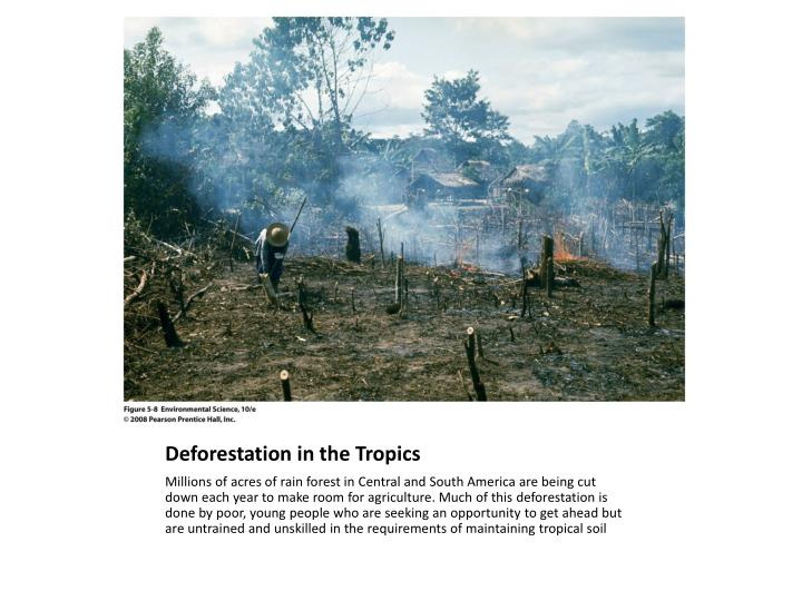 Deforestation in the Tropics