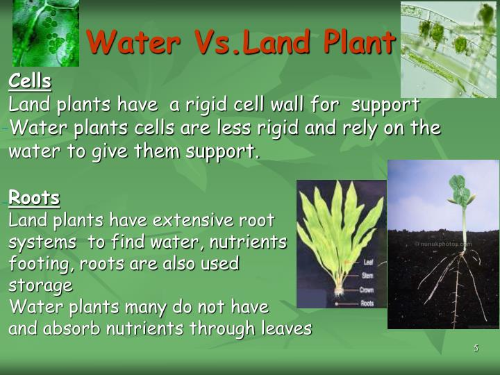 Water Vs.Land Plant