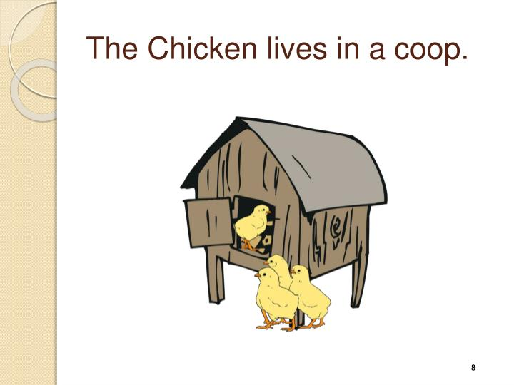 The Chicken lives in a coop.