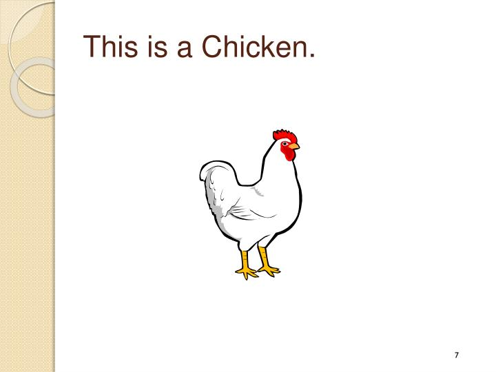 This is a Chicken.