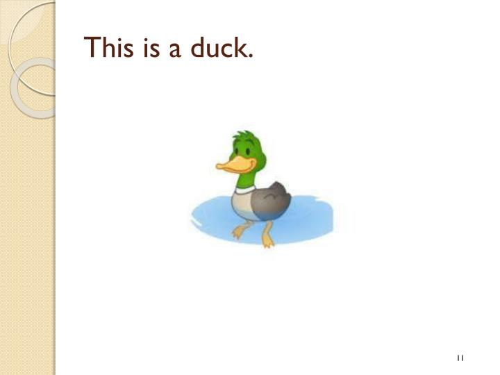 This is a duck.