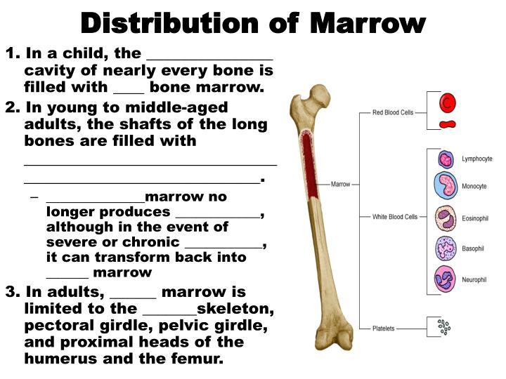 Distribution of Marrow