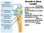 growth in bone length