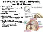 structure of short irregular and flat bones