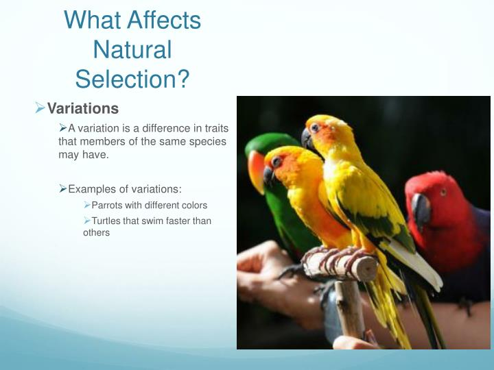 What Affects Natural Selection?