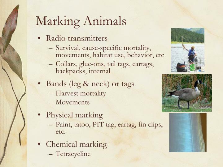 Marking Animals
