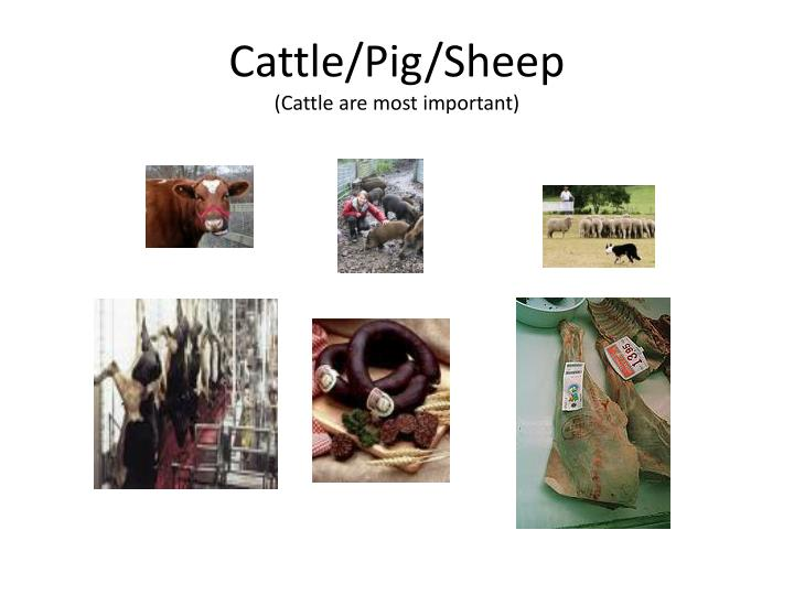 Cattle/Pig/Sheep