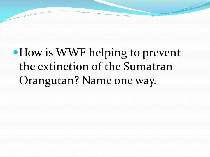 How is WWF helping to prevent the extinction of the Sumatran Orangutan? Name one way.