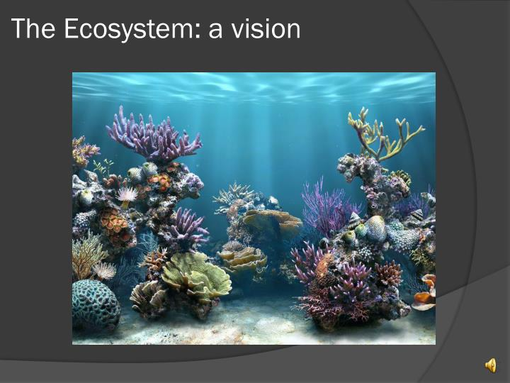 The Ecosystem: a vision