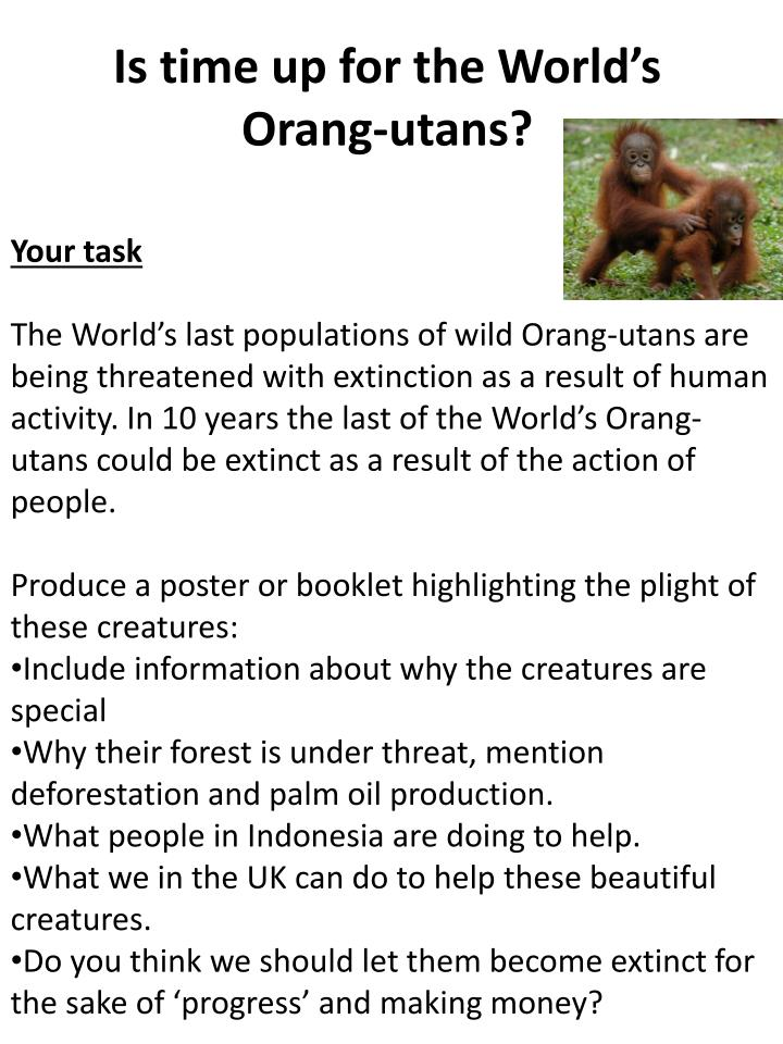 Is time up for the World's Orang-utans?