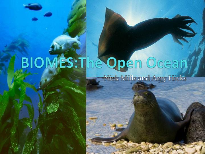 Biomes the open ocean