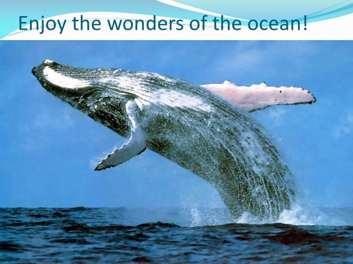 Enjoy the wonders of the ocean!
