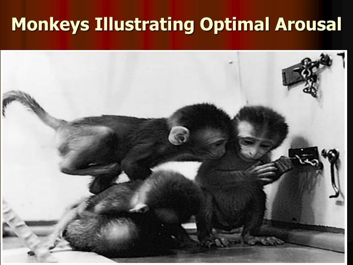 Monkeys Illustrating Optimal Arousal