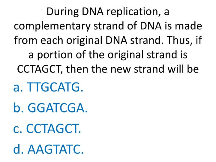 During DNA replication, a complementary strand of DNA is made from each original DNA strand. Thus, if a portion of the original strand is CCTAGCT, then the new strand will