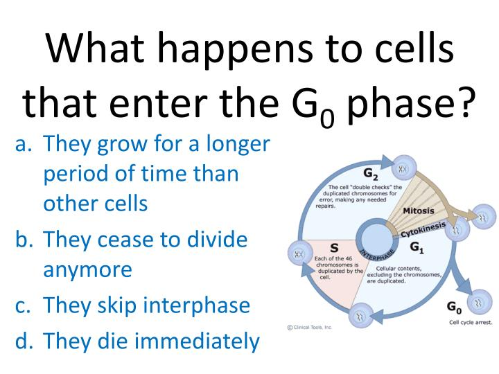 What happens to cells that enter the G