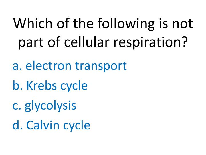 Which of the following is not part of cellular respiration