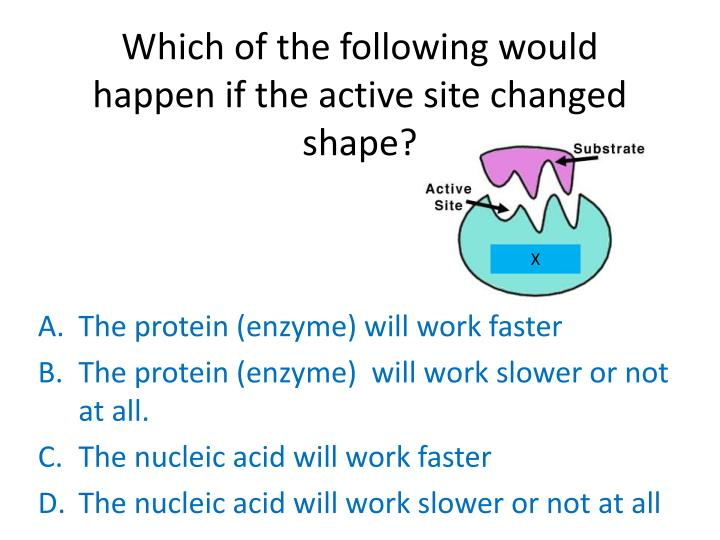 Which of the following would happen if the active site changed shape