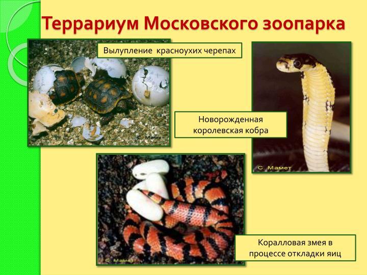 Террариум Московского зоопарка