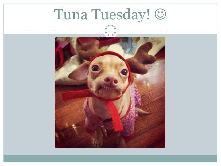 Tuna Tuesday!
