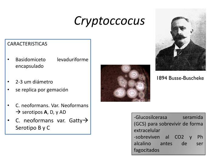 Cryptoccocus