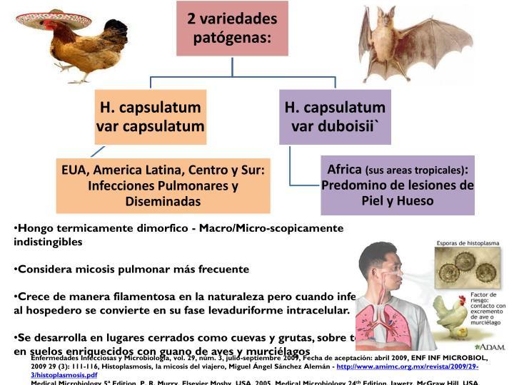 Hongo termicamente dimorfico - Macro/Micro-scopicamente indistingibles