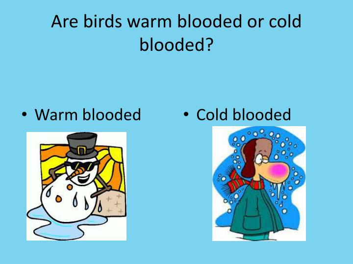 Are birds warm blooded or cold blooded?