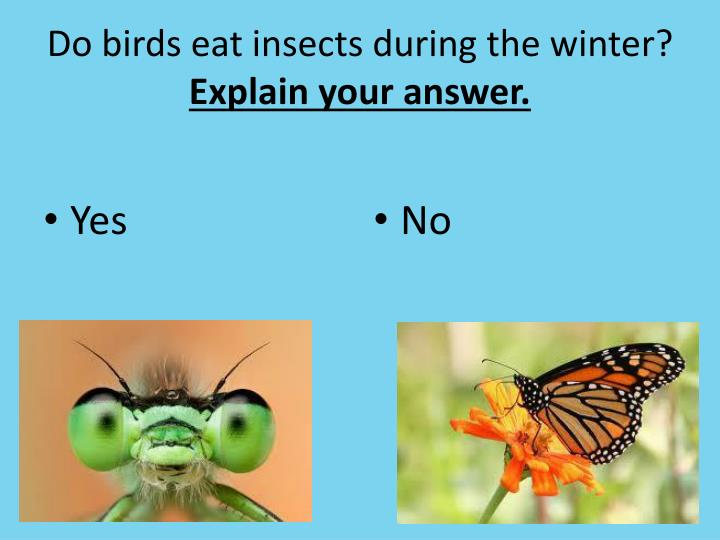 Do birds eat insects during the winter?