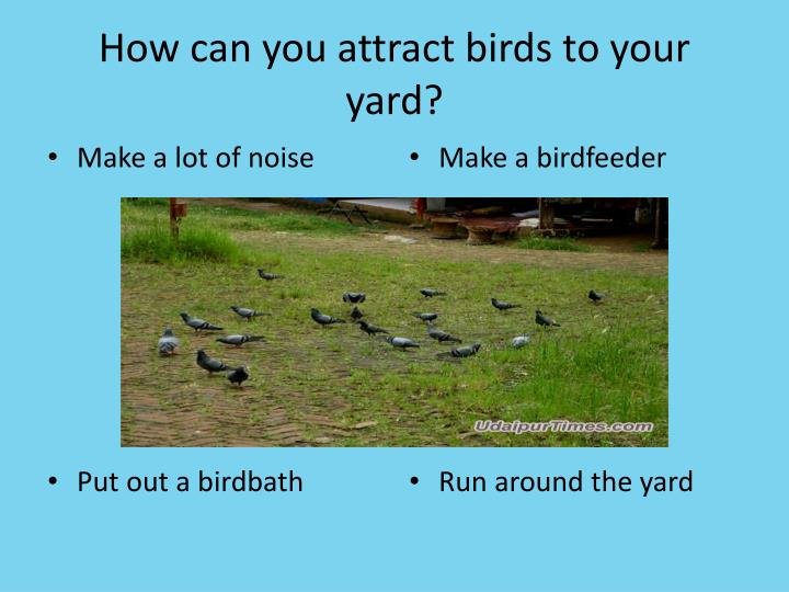 How can you attract birds to your yard?