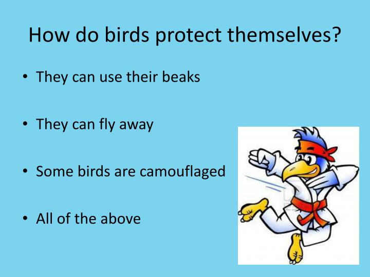 How do birds protect themselves?