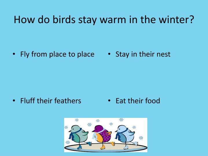 How do birds stay warm in the winter?