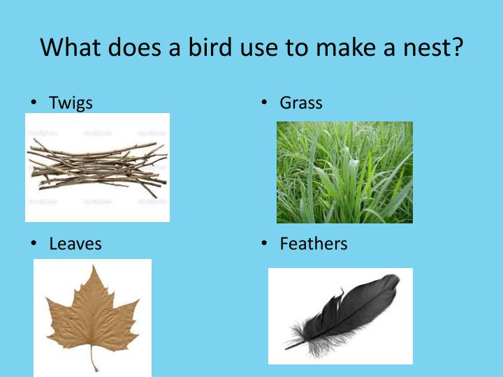 What does a bird use to make a nest?