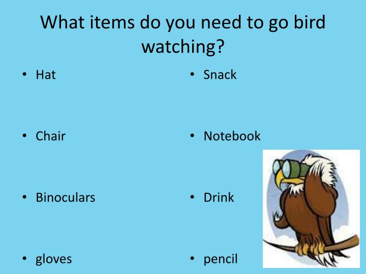 What items do you need to go bird watching?