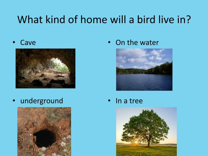 What kind of home will a bird live in?