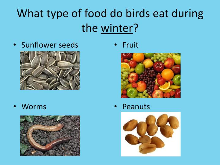 What type of food do birds eat during the