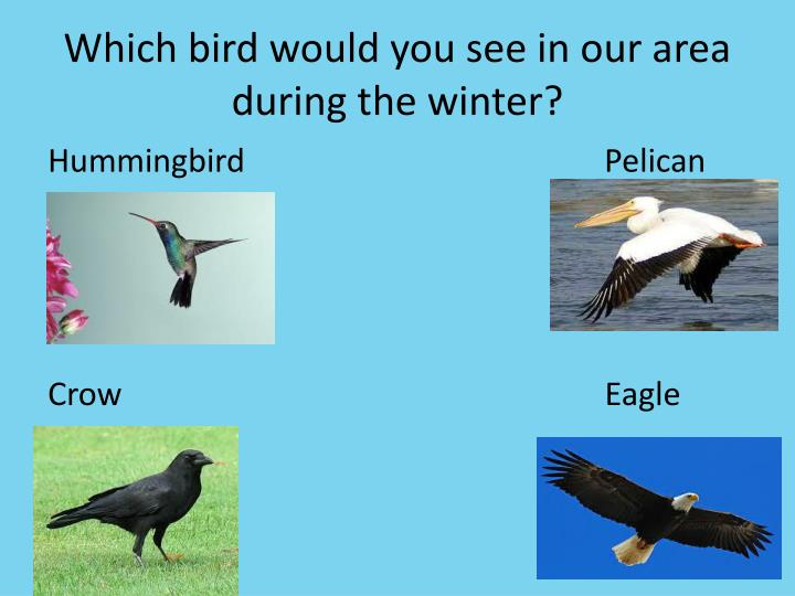 Which bird would you see in our area during the winter?