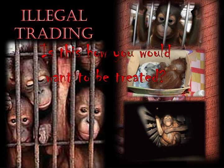 Illegal Trading