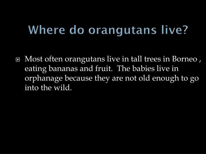 Where do orangutans live?