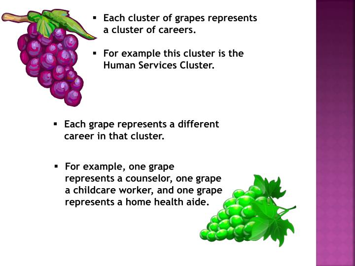 Each cluster of grapes represents a cluster of careers.