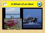 a whale of an idea