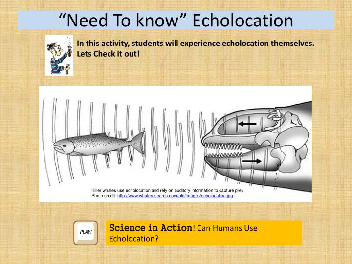 """""""Need To know"""" Echolocation"""