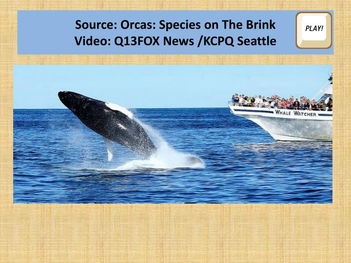 Source: Orcas: Species on The Brink