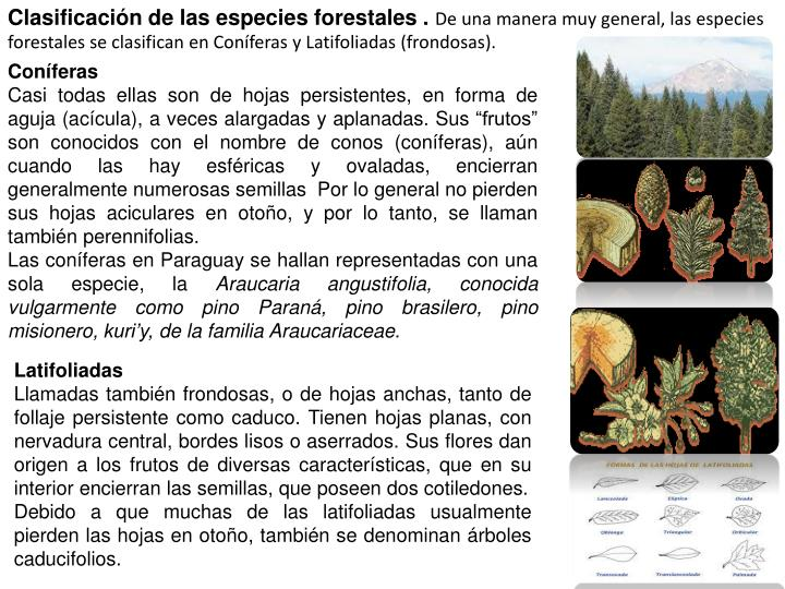 Clasificación de las especies forestales .