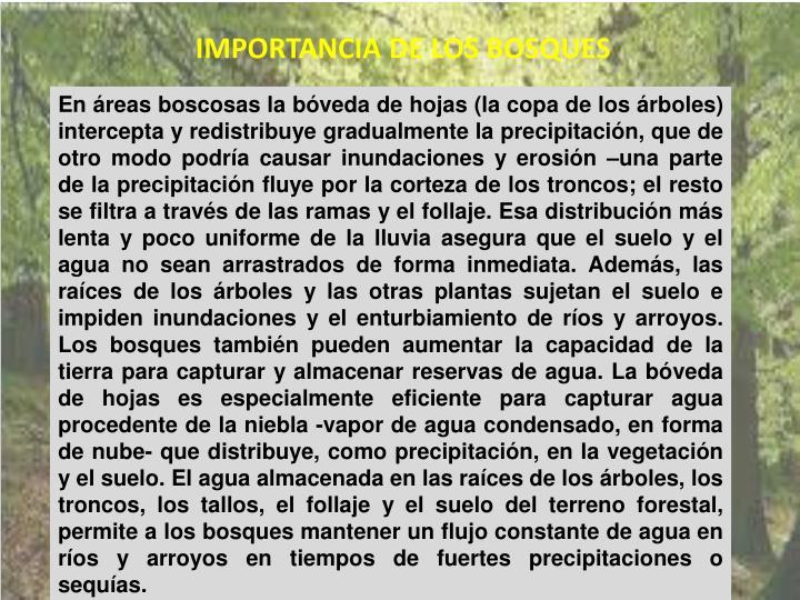 IMPORTANCIA DE LOS BOSQUES