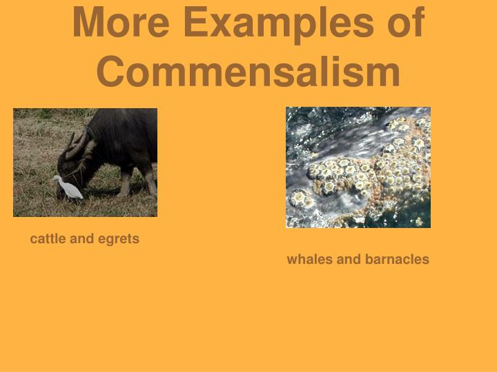 what are some examples of a commensalism relationship
