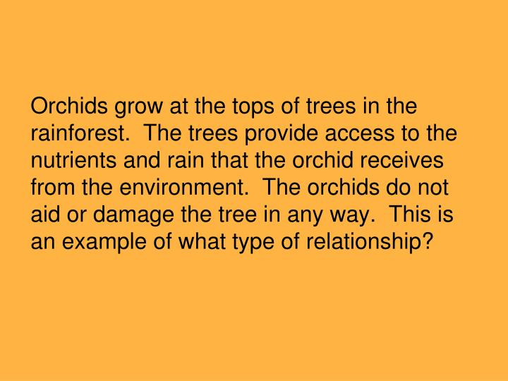 Orchids grow at the tops of trees in the rainforest.  The trees provide access to the nutrients and rain that the orchid receives from the environment.  The orchids do not aid or damage the tree in any way.  This is an example of what type of relationship?