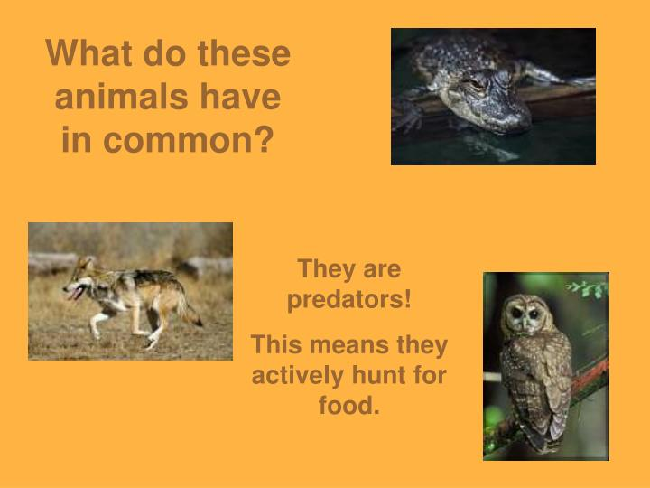 What do these animals have in common?