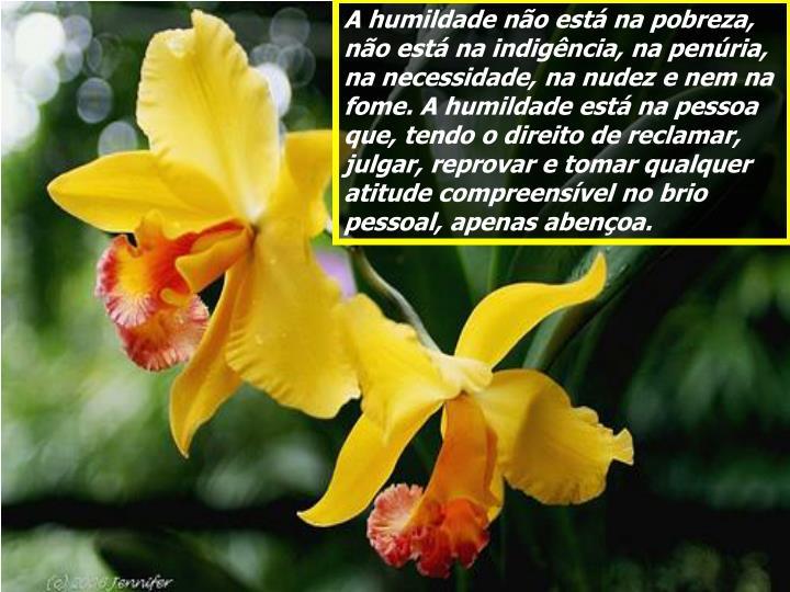 A humildade não está na pobreza, não está na indigência, na penúria, na necessidade, na nudez e nem na fome. A humildade está na pessoa que, tendo o direito de reclamar, julgar, reprovar e tomar qualquer atitude compreensível no brio pessoal, apenas abençoa.