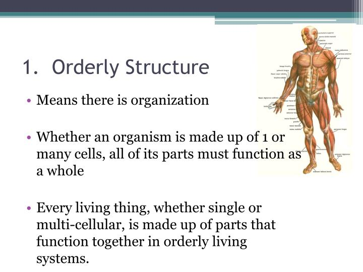 1.  Orderly Structure